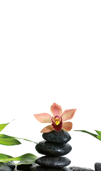4028 Zen Steine Orchidee web