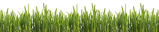"""Motiv """"Gras"""" (0423)"""