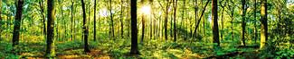 """Motiv """"Waldlichtung"""" (0449)"""