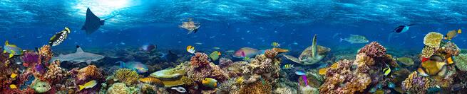 Coral reef | 0488