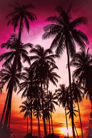 Palmen | 4020