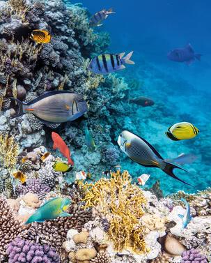 Korallenriff | 4031