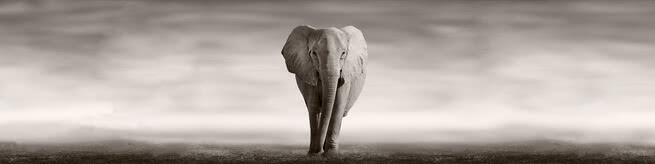 Elephant | 0508
