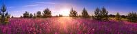 0513 Lavendelfeld im Sonnenaufgang 3200x800.jpg