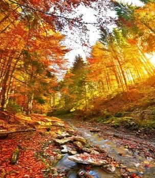 Herbstwald | 4035