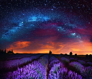 Milky Way above field of lavender | 4036