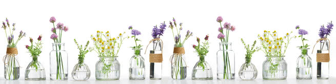 Meadow herbs in vases | 0515