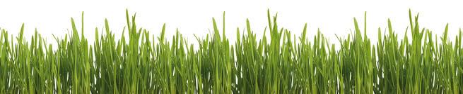 Grass | 0423