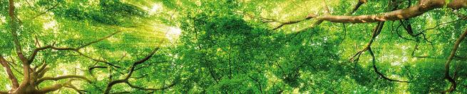 Treetops | 0448