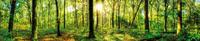 0449 Waldlichtung.jpg